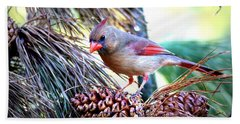 Img_0311 - Northern Cardinal Hand Towel by Travis Truelove