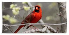 Img_2027-004 - Northern Cardinal Bath Towel