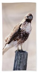 Immature Red Tailed Hawk Hand Towel