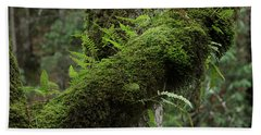 Hand Towel featuring the photograph In The Cool Of The Forest by Mike Eingle