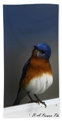 Inquisitive Bluebird Bath Towel