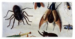 Insects, 1660 Hand Towel