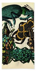 Insects, Plate-14 Hand Towel