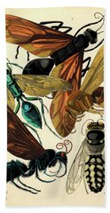 Insects, Plate-6  Hand Towel