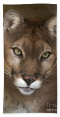 Intense Cougar Hand Towel