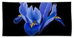 Hand Towel featuring the photograph Iris Reticulata, Black Background by Paul Gulliver