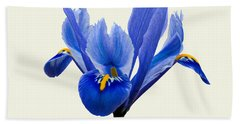 Hand Towel featuring the photograph Iris Reticulata, Cream Background by Paul Gulliver
