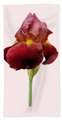 Hand Towel featuring the photograph Iris Vitafire Transparent Background by Paul Gulliver