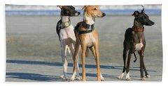 Italian Greyhounds On The Beach Bath Towel