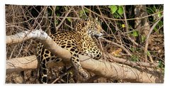 Jaguar In Repose Bath Towel by Wade Aiken