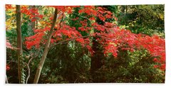 Japanese Maple Hand Towel by John Pagliuca