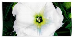 Bath Towel featuring the photograph Jimson Weed #1 by Lou Novick