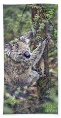 Koala Photographs Hand Towels
