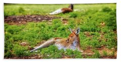 Hand Towel featuring the photograph Just Chillin, Yanchep National Park by Dave Catley