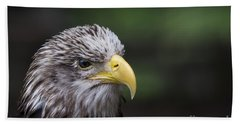Bath Towel featuring the photograph Juvenile Bald Eagle by Andrea Silies