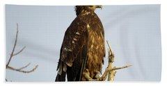Juvenile Bald Eagle 1 Bath Towel