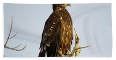 Juvenile Bald Eagle 1 Hand Towel