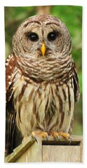 Juvenile Barred Owl Hand Towel by Jack Cushman