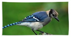 Juvenile Blue Jay  Bath Towel