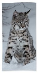 Juvenile Bobcat In The Snow Hand Towel