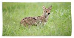 Juvenile Coyote Hand Towel