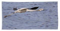 Juvenile Flamingo Taking Off Bath Towel