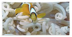 Juvenile Red Sea Clownfish, Eilat, Israel 3 Hand Towel