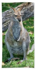 Hand Towel featuring the photograph Kangaroo by Patricia Hofmeester