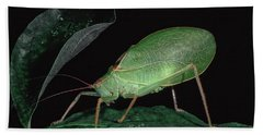 Katydid At Night Hand Towel
