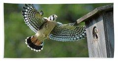 Kestrel Fledgling Visits Nest Hand Towel by Alan Lenk