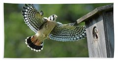 Kestrel Fledgling Visits Nest Bath Towel by Alan Lenk
