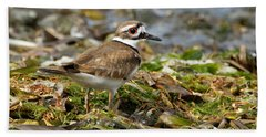 Killdeer At The Coast Bath Towel