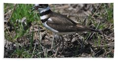 Killdeer Guarding Her Eggs Hand Towel