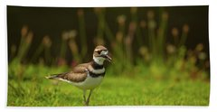 Killdeer Hand Towel by Karol Livote