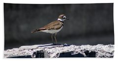 Killdeer Hand Towel by M Images Fine Art Photography and Artwork