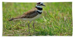 Killdeer Hand Towel by Rich Leighton