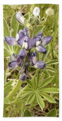 Hand Towel featuring the photograph Kings Park Wildflower by Cassandra Buckley