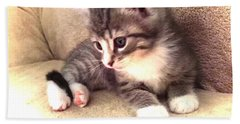 Kitten Deep In Thought Bath Towel