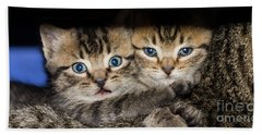 Kittens In The Shadow Bath Towel