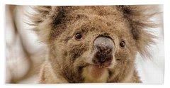 Koala 4 Hand Towel by Werner Padarin