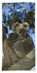 Koala Phascolarctos Cinereus Mother Hand Towel by Konrad Wothe