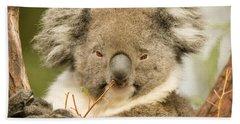 Koala Snack Hand Towel by Mike  Dawson