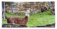 Kuelap Ruins And Llama Hand Towel by Jess Kraft