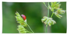 Lady Bird On A Herb Straw Close Up Bath Towel