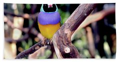 Lady Gouldian Finch Hand Towel by Haleh Mahbod