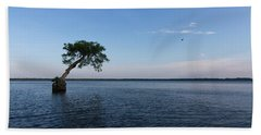Lake Disston Cypress #2 Hand Towel by Paul Rebmann