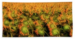Large Field Of Sunflowers Hand Towel