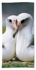 Laysan Albatross Phoebastria Hand Towel by Tui De Roy