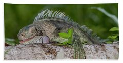 Bath Towel featuring the photograph Lazy Iguana by Rachel Lee Young