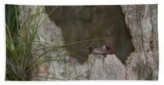 Lazy Tree Frog Hand Towel